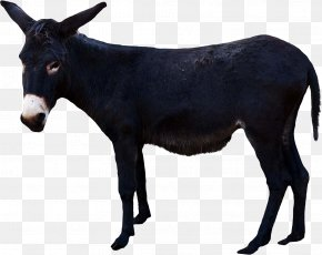 Donkey - Cattle Donkey Pack Animal Snout PNG