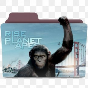 Planet Of The Apes - James Franco Rise Of The Planet Of The Apes Film PNG
