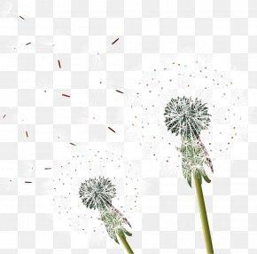 Dandelion - Dandelion Clip Art PNG