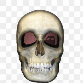 Skull - Skull Liang Bua Skeleton Homo Sapiens Flores Man PNG