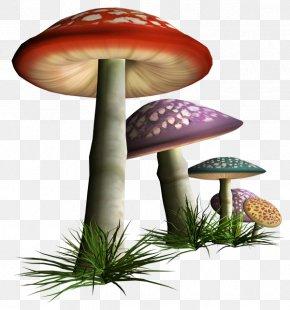 Mushroom - Edible Mushroom Fungus Shiitake PNG