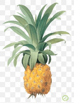 Pineapple Image Download - Pineapple Printing Botanical Illustration Printmaking Fruit PNG