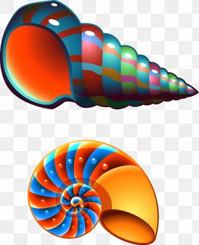 Colorful Conch - Seashell Conch Mollusc Shell Clip Art PNG