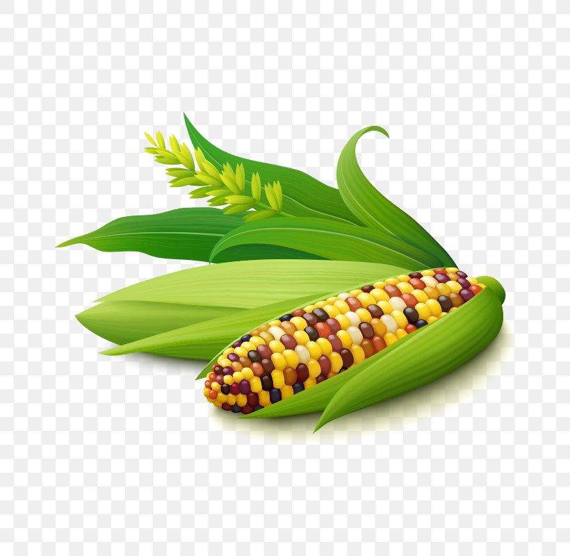 Corn On The Cob Maize Corn Kernel Illustration, PNG, 800x800px, Corn On The Cob, Commodity, Corn Kernel, Corn Oil, Corncob Download Free