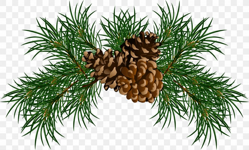 Pine Conifer Cone Branch Clip Art, PNG, 5451x3293px, Scots Pine, Branch, Christmas Decoration, Christmas Ornament, Conifer Download Free