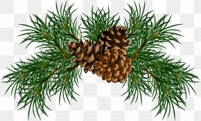 Pine Branches With Pine Cones Picture - Pine Conifer Cone Branch Clip Art PNG