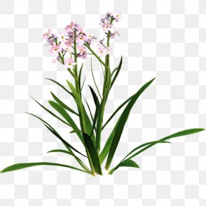 Gypsophila Paniculata Clipart - Clip Art Borders And Frames Free Content Vector Graphics PNG