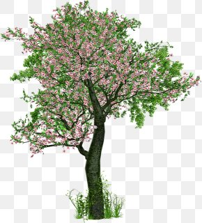 Jasmine Cherry Blossom - The Love Of Trees Tree Planting Deciduous PNG