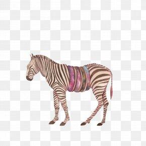 Zebra - Africa Quagga PNG