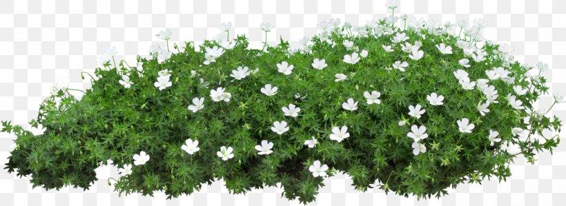 Flower Garden Png 1280x468px Flower Garden Art Branch Deviantart Flower Download Free