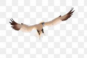 Flying Bird - Bird Pelican Icon PNG