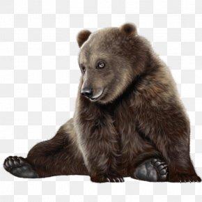 Brown Bear Blind - Brown Bear PNG