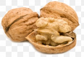 Real Walnut Photography - English Walnut Food Hazelnut PNG