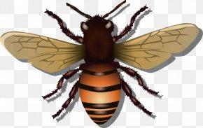 Honey Bees Images - Western Honey Bee Beehive Clip Art PNG