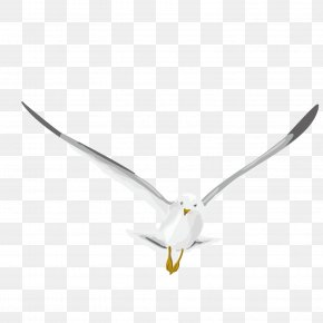 Vector Pattern Flying Pigeon Pigeon - Homing Pigeon Pattern PNG