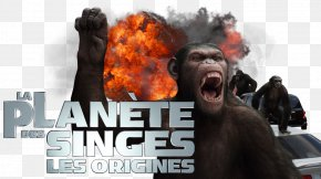 Planet Of The Apes - Planet Of The Apes 0 Television Fan Art PNG