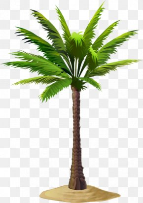 Palm Leaf Border - Asian Palmyra Palm Date Palm Coconut Babassu Clip Art PNG