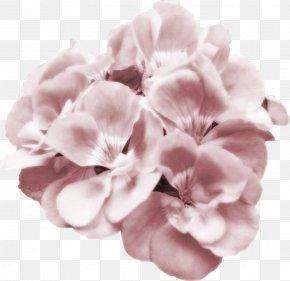 Pink Watercolor Flower - Flower Pink Petal Clip Art PNG