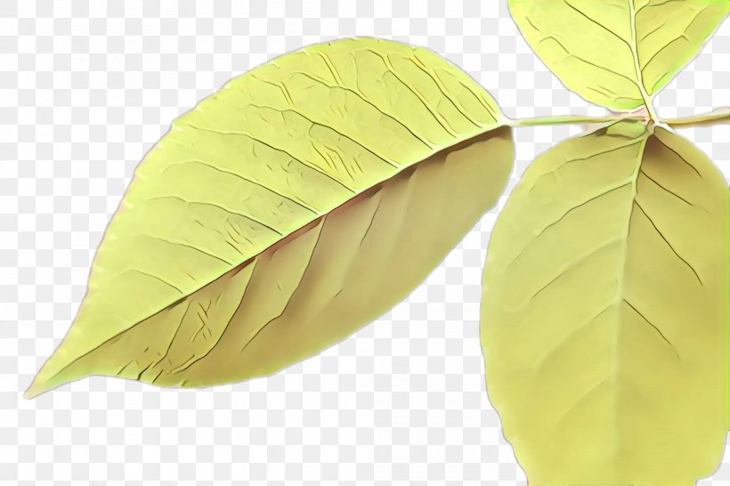 Leaf Tree Plant Yellow Flower, PNG, 2000x1332px, Cartoon, Beech, Deciduous, Flower, Flowering Plant Download Free