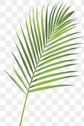 Palm Sunday - Royalty-free Frond Arecaceae Palm Branch Leaf PNG