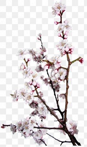 매화 - Saison Des Amours Spring Season Doll Le Printemps PNG