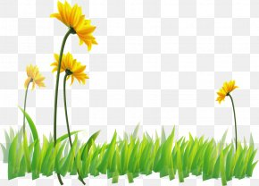 Vector Painted Green Flowers - Narcissus Flora Yellow Wildflower Wallpaper PNG