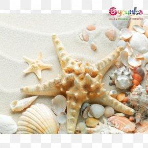 Seashell - Seashell Sand Mollusc Shell Shell Beach PNG