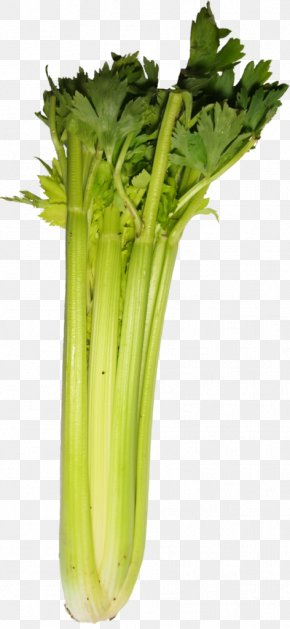 Vegetable - Celery Spring Greens Food Komatsuna Vegetable PNG