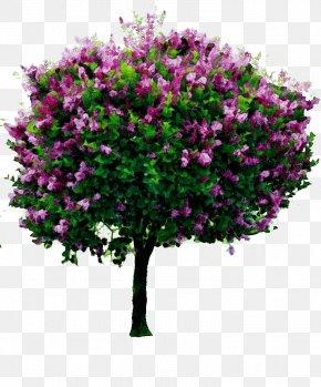 Red Bud Cut Flowers - Tree Transparency Common Lilac Shrub Syringa Meyeri PNG