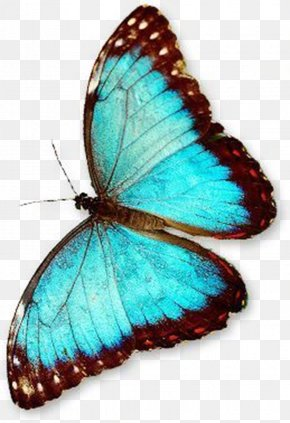 Butterfly PNG