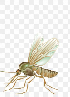 Mosquito - Mosquito Fly Vector Insect PNG