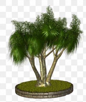 Vf - Arecaceae Tree Plant Asian Palmyra Palm PNG