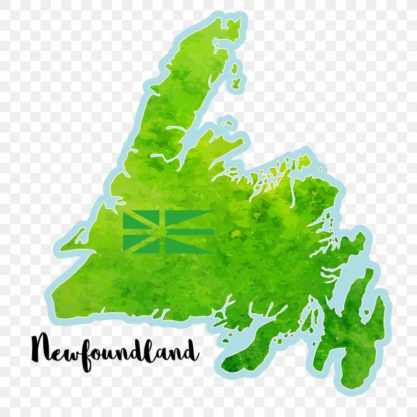 Newfoundland And Labrador Leaf Tree Font, PNG, 1600x1600px, Newfoundland And Labrador, Grass, Green, Leaf, Mug Download Free