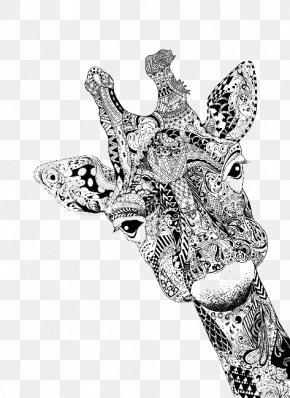 Giraffe - Giraffe Drawing Portrait Doodle Sketch PNG