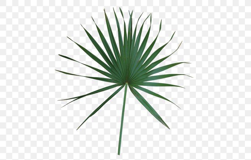 Leaf Arecaceae Plant Stem Livistona Palm Branch, PNG, 500x523px, Leaf, Agave, Arecaceae, Arecales, Frond Download Free