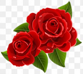 Red Roses - Rose Heart Love Valentine's Day Clip Art PNG