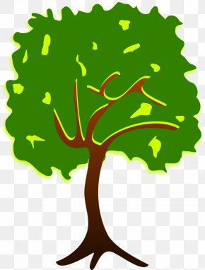 Drawing Trees - Tree Branch Clip Art PNG