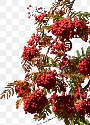 Hawthorn Free Download Under The Blue Sky - Download Frutti Di Bosco Hawthorn PNG