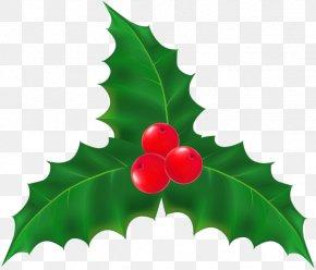 Mistletoe - Mistletoe Plant Christmas Clip Art PNG