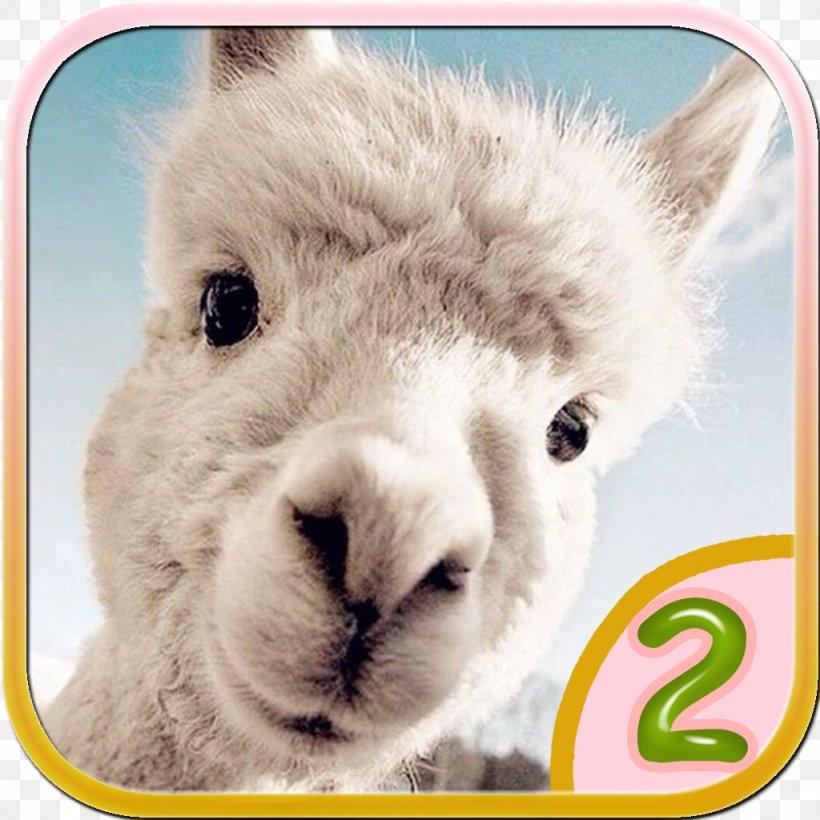 Desktop Wallpaper Alpaca Iphone Dog Cuteness Png