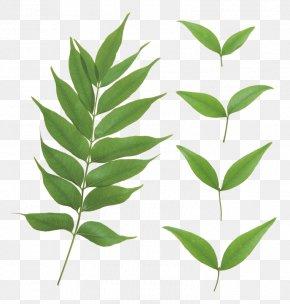 Leaf - Clip Art Image Desktop Wallpaper Psd PNG