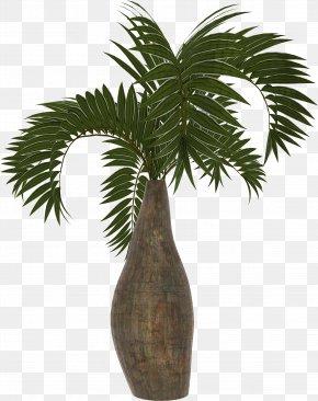 Palm - Arecaceae Asian Palmyra Palm Coconut Date Palm Plant PNG
