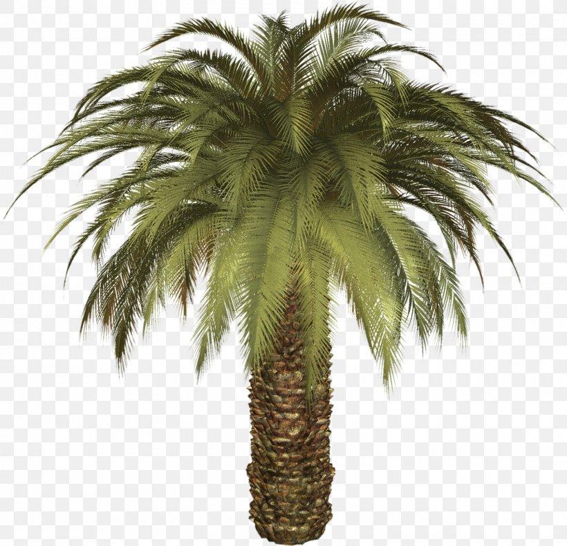 Arecaceae Palm Tree Elementary School De Palm Tree Restaurant Rhynchophorus Ferrugineus, PNG, 1600x1542px, Arecaceae, Areca Palm, Arecales, Asian Palmyra Palm, Attalea Speciosa Download Free
