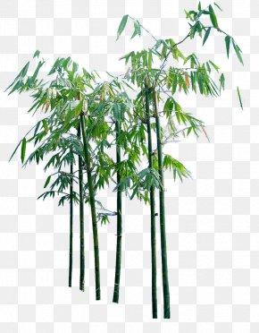Creative Cartoon Bamboo Trees - Bamboo PNG