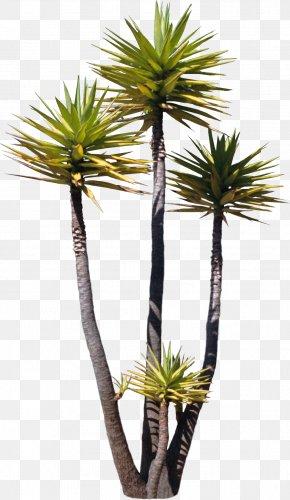 Tree - Tree Arecaceae Asian Palmyra Palm Plant Painting PNG