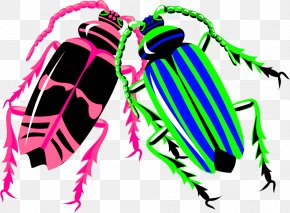 Color Insect - Longhorn Beetle Worm PNG