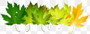 Green Autumn Leaves Transparent Clip Art Image - Autumn Leaf Color Green Clip Art PNG