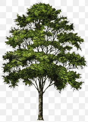 Tree Image Download Picture - Tree Clip Art PNG