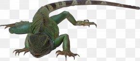 Lizard - Lizard Reptile Amphibian Snake Vertebrate PNG
