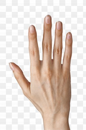 Hand Showing Five Fingers Clipart Image - Finger Icon Computer File PNG